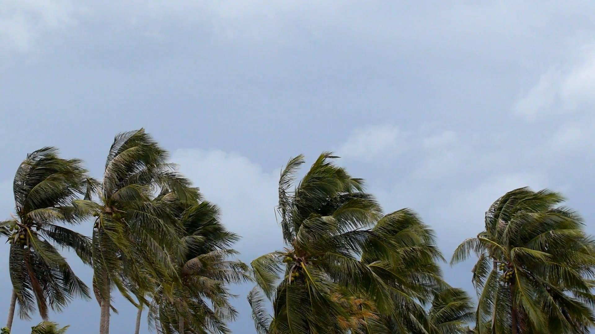 თბილ ამინდს ხვალ ქარიშხალი და წვიმა შეცვლის