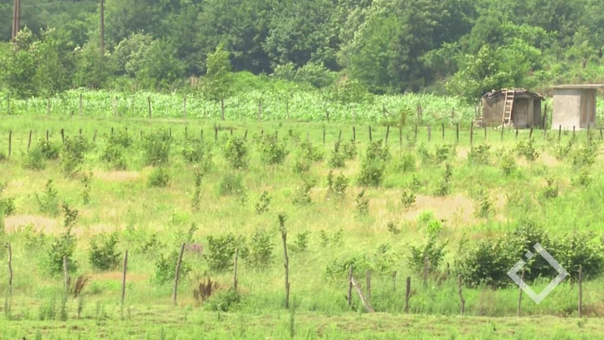 ფერმერთა 70% კუთვნილ კომპენსაციას ვერ იღებს